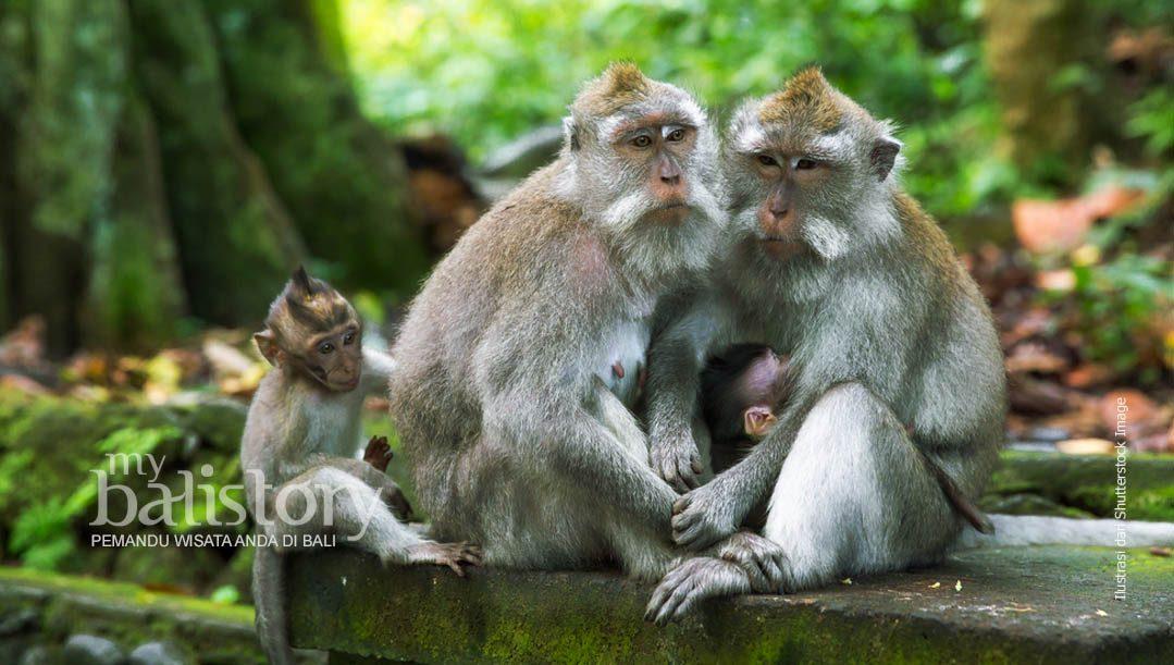 Ubud Monkey Forest – Tempat Wisata Cagar Alam Dan Candi Bali