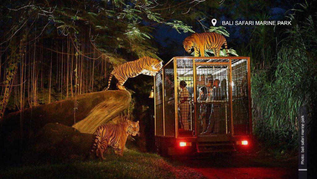 Bali Safari Marine Park night safari