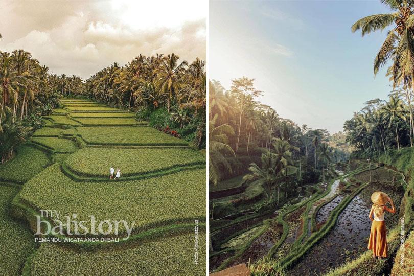 Terasiring Tegalalang Bali 1