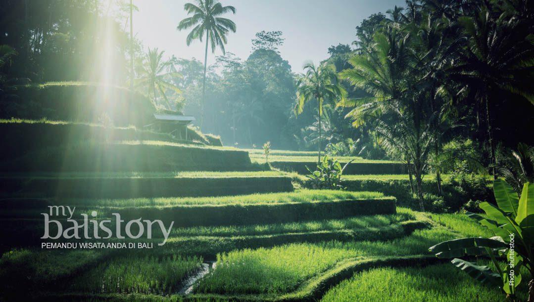 Mengunjungi Tempat Wisata Terasiring Tegalalang Ubud Bali